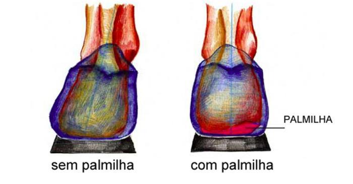 palmilha